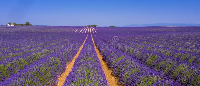 Gebied van lavendel royalty-vrije stock fotografie