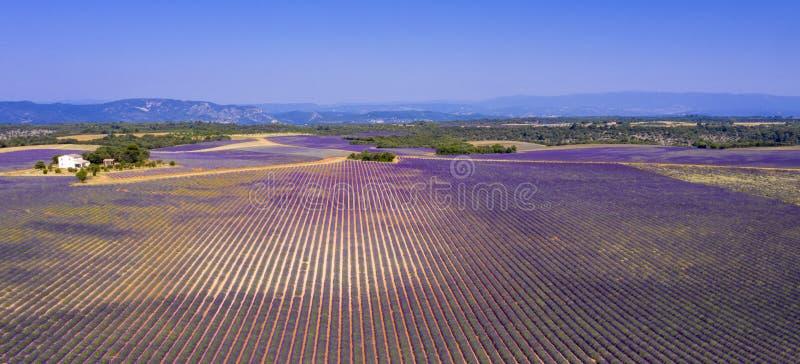 Gebied van lavendel royalty-vrije stock afbeeldingen
