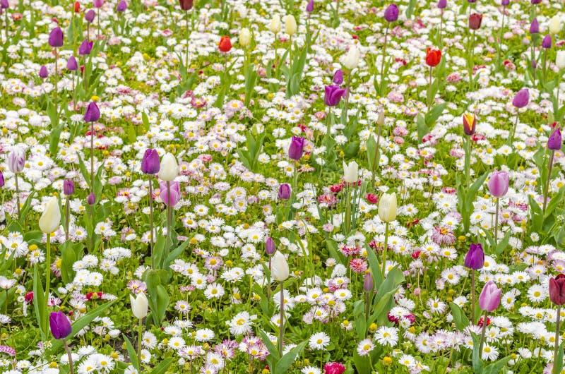 Gebied van multicoloured bloemen stock afbeeldingen