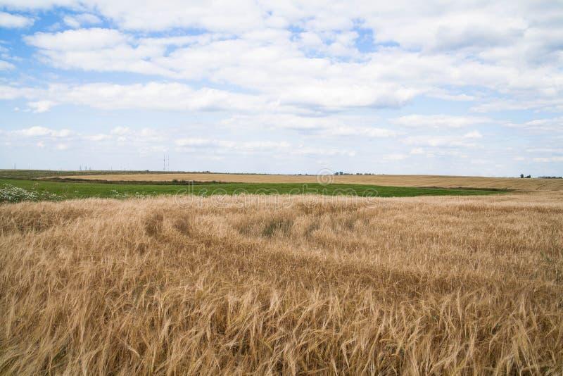 Gebied van rijpe wheaten en blauwe hemel met wolken stock afbeeldingen