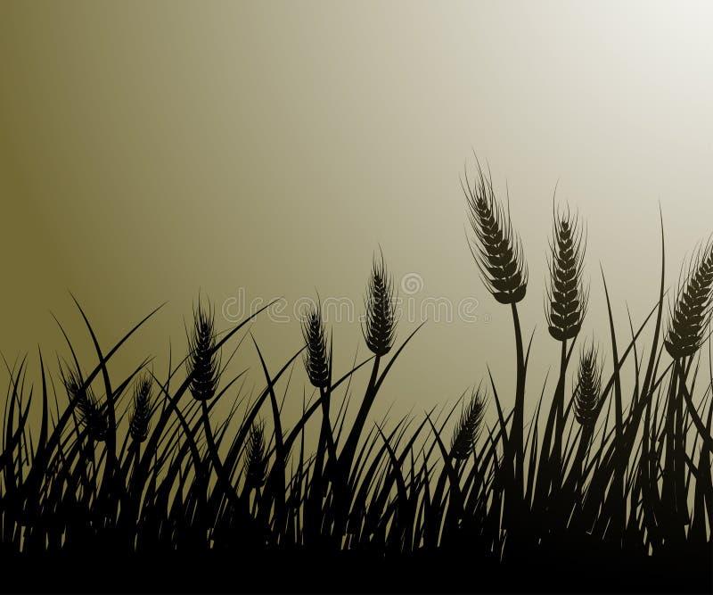 Gebied van tarwe stock illustratie