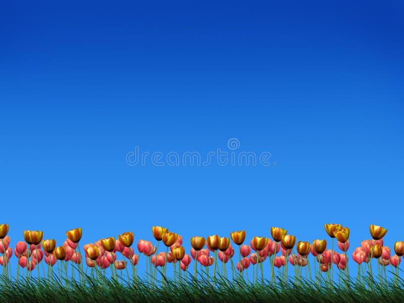 Gebied van tulpen royalty-vrije illustratie