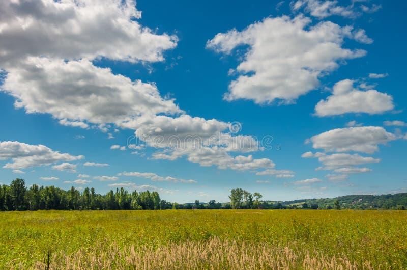 Gebied van wild gras met mooie wolken royalty-vrije stock afbeelding
