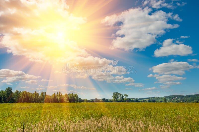Gebied van wild gras met mooie wolken royalty-vrije stock fotografie