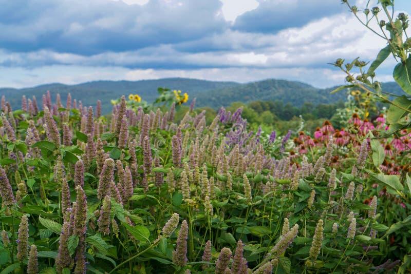 Gebied van wilde bloemen royalty-vrije stock foto