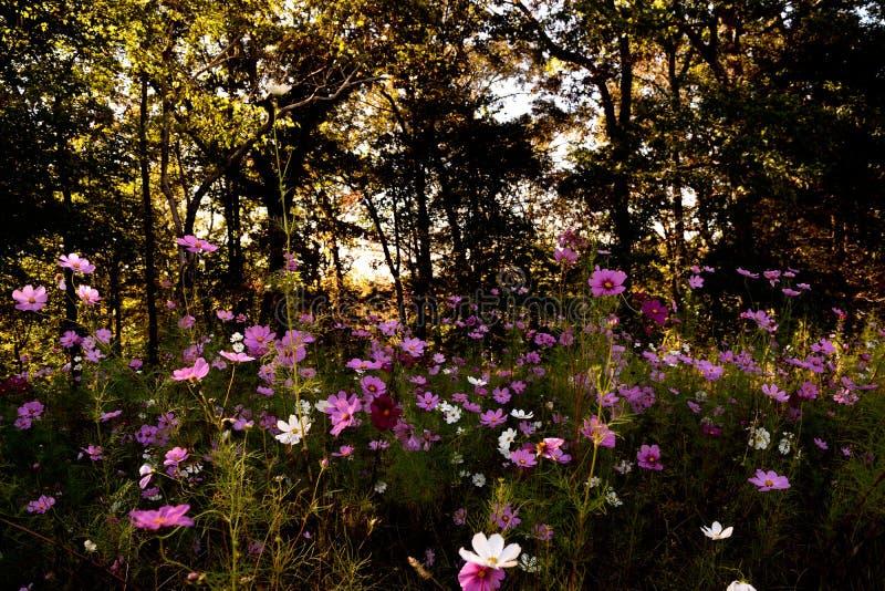 Gebied van Wildflowers royalty-vrije stock afbeelding