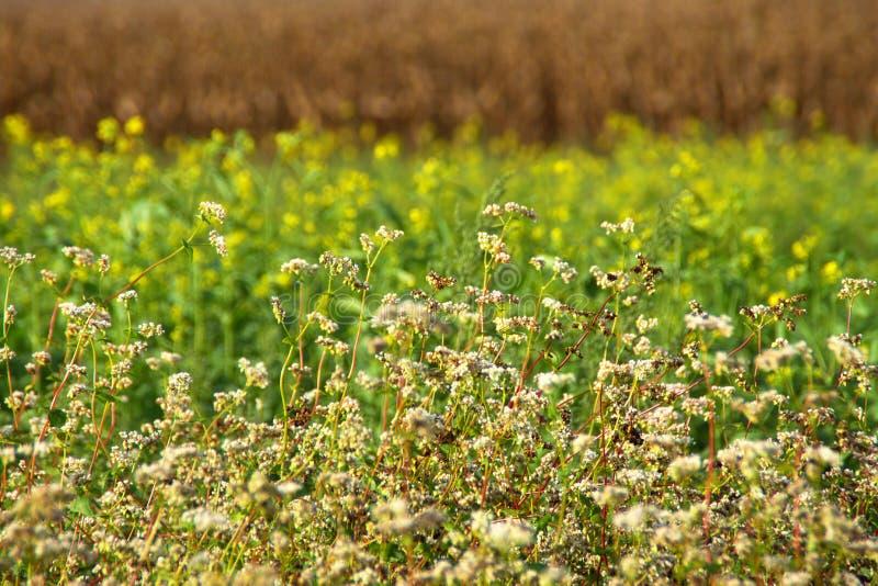 Gebieden in de vroege herfst In de voorgrond bebouwbare grond, helder geel zonnebloemgebied bij afstand stock fotografie