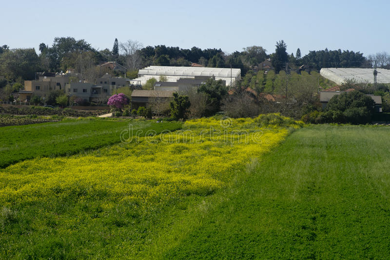 Gebieden in Hanadiv-vallei, Israël stock foto