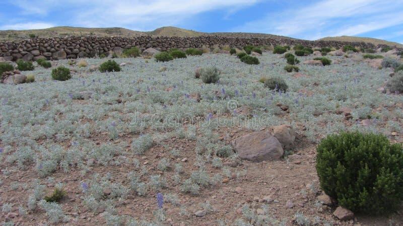Gebieden van het dorp van Chatauana, Uyuni in Bolivië stock foto's