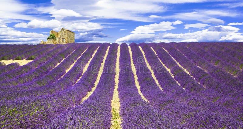 Gebieden van lavander in Provance, Frankrijk stock foto's
