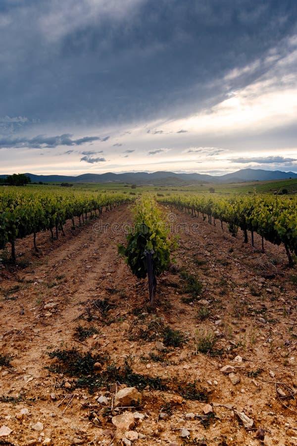 Gebieden van wijngaarden bij zonsondergang in Cariñena, Aragà ³ n, Spanje stock foto