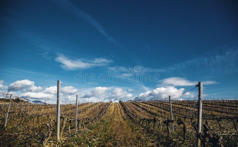 Gebieden van wijngaarden in een kelder royalty-vrije stock afbeelding