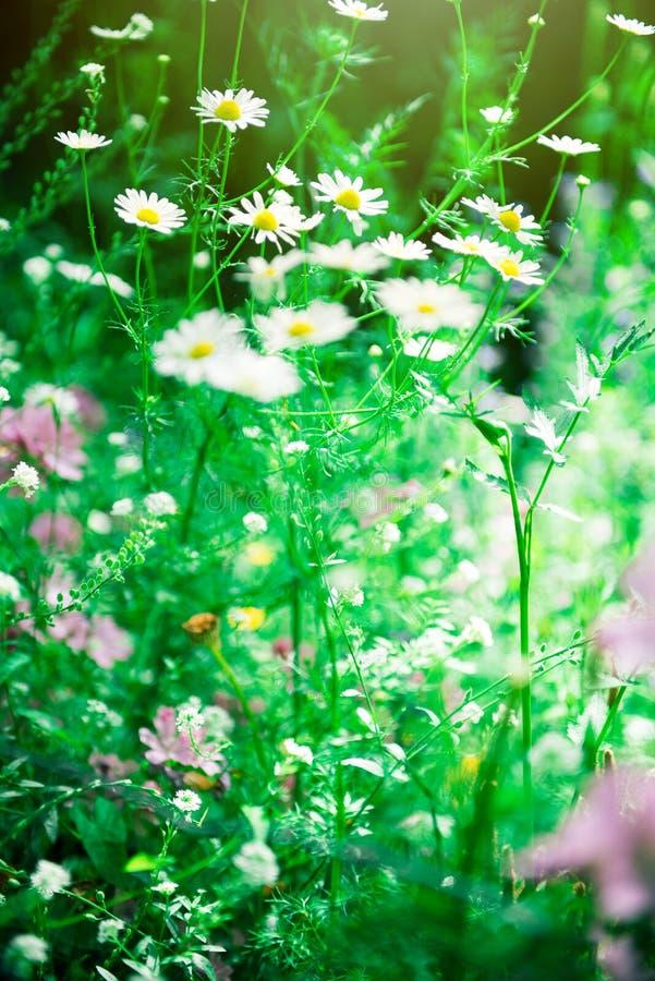 Gebiedsbloemen, bloemachtergrond, mooie kleuren stock fotografie