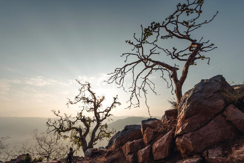 Gebirgsbäume in der Dämmerung Indien stockfoto