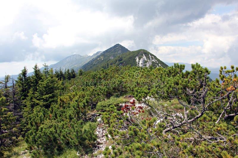 Gebirgsbahn am Rand Berge Piatra Craiului lizenzfreie stockfotos