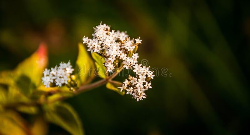 Gebirgsblumen stockfotos