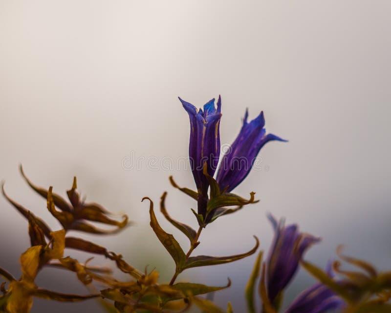 Gebirgsblumen im Herbstzeitraum lizenzfreie stockfotos