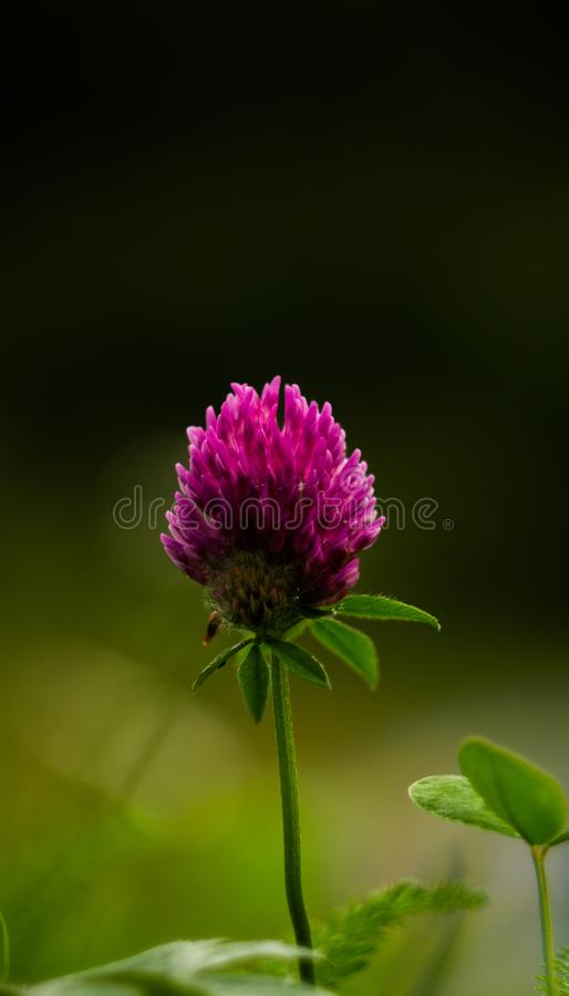 Gebirgsblumen im Herbstzeitraum stockbilder