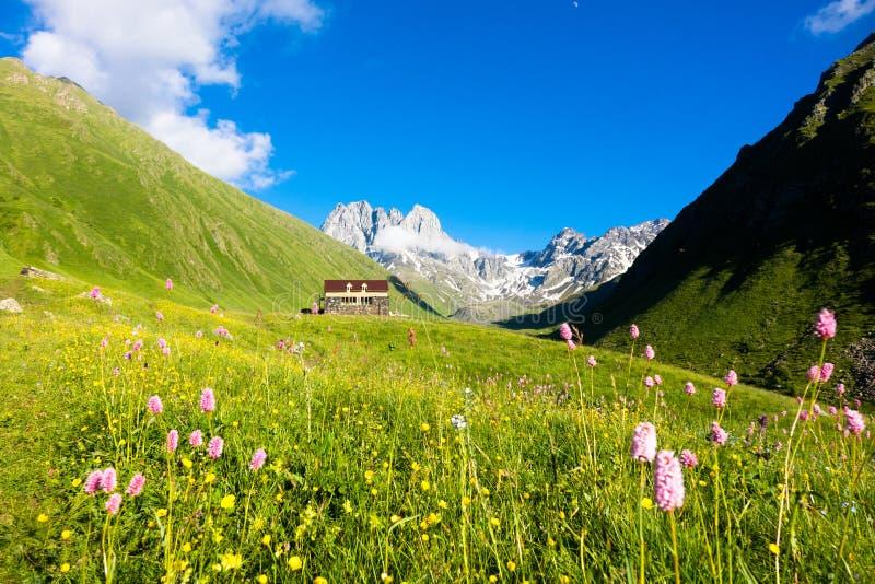Gebirgsblumen im Tal Chauhi-Spitzen lizenzfreies stockfoto