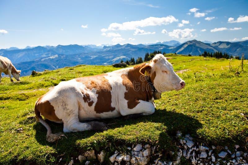 Gebirgsferien in dem See in Österreich lizenzfreie stockfotos