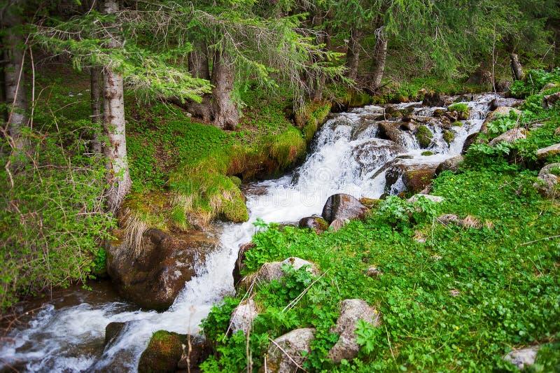 Gebirgsflussstrom, Wasserfall in den Bergen, Gebirgsbach unter Kiefern und Grün Kaskade fällt über moosige Felsen lizenzfreie stockfotografie