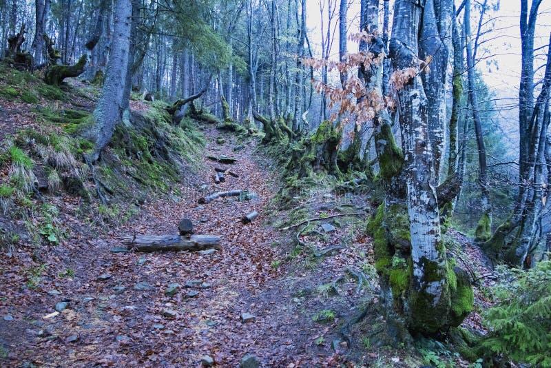 Gebirgsgehweg des mysteriösen Waldes stockfotos
