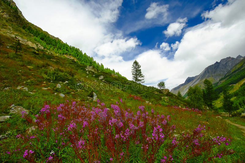 Gebirgslandschaft mit Blumen lizenzfreies stockfoto