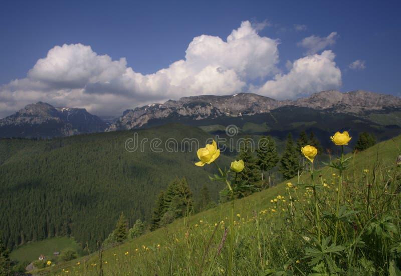 Gebirgslandschaft mit gelben Blumen lizenzfreie stockfotografie