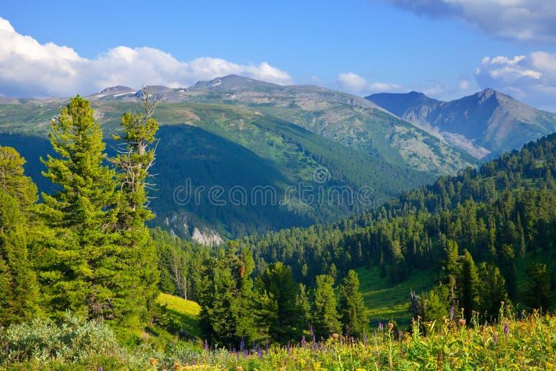 Gebirgslandschaft mit Zederwald lizenzfreie stockfotos