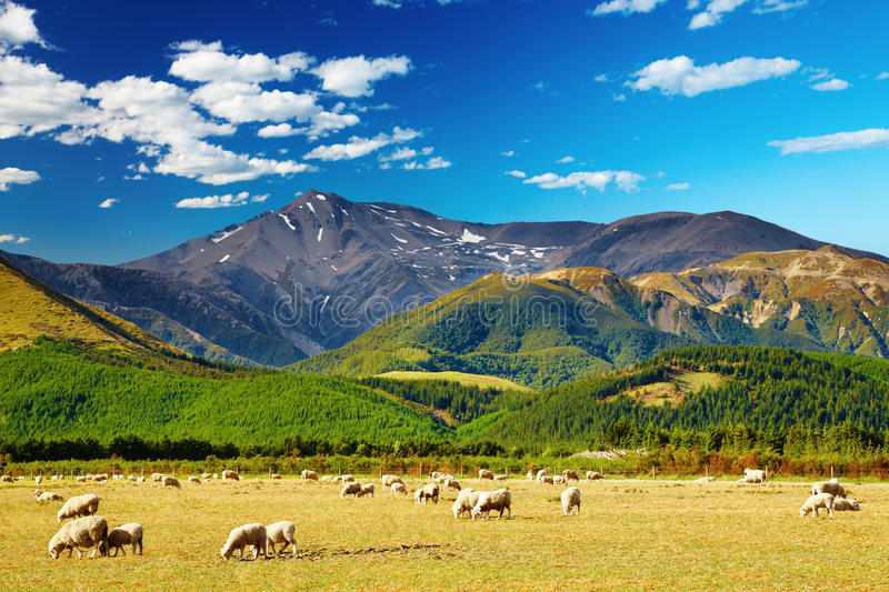 Gebirgslandschaft, Neuseeland lizenzfreies stockbild
