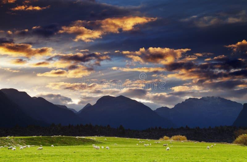 Gebirgslandschaft, Neuseeland lizenzfreie stockfotos