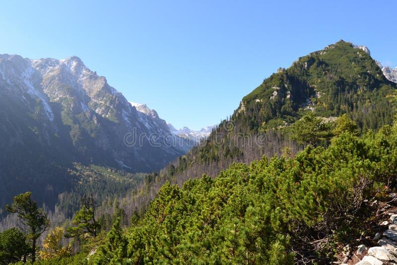 Gebirgsnaturgrün-Holzwolken stockbild