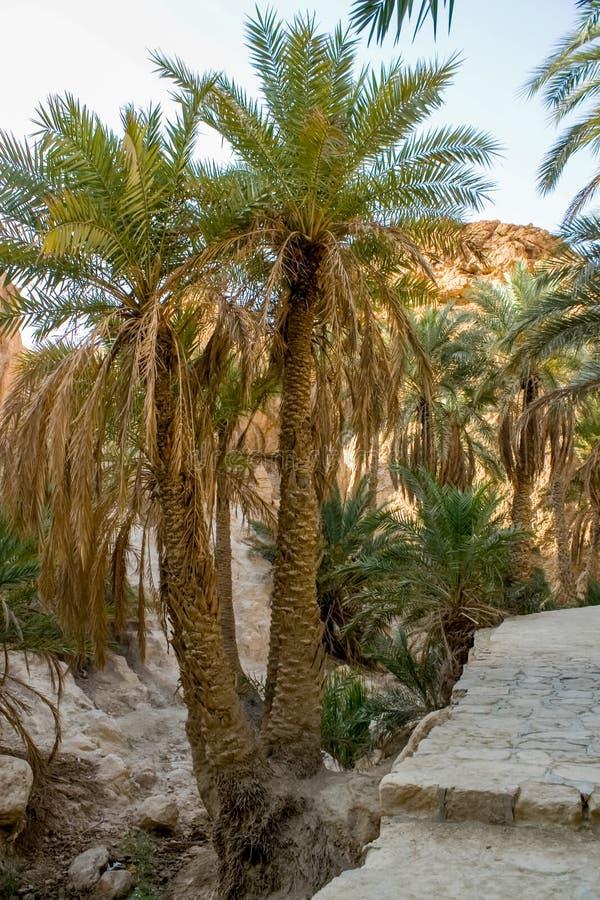 Gebirgsoase Chebika in Tunesien stockbilder
