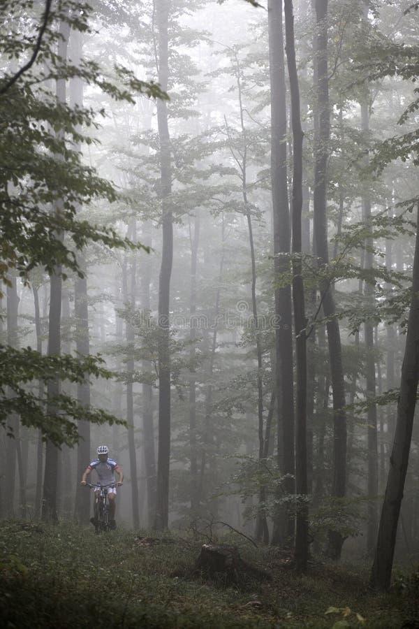 Gebirgsradfahrender Frühling stockfoto