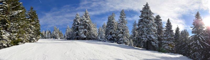 Gebirgsskisteigung durch silbernen Wald stockbild