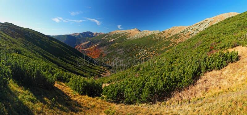 Gebirgssommerlandschaft mit buntem Wald - kleines Tatra - S lizenzfreie stockfotos