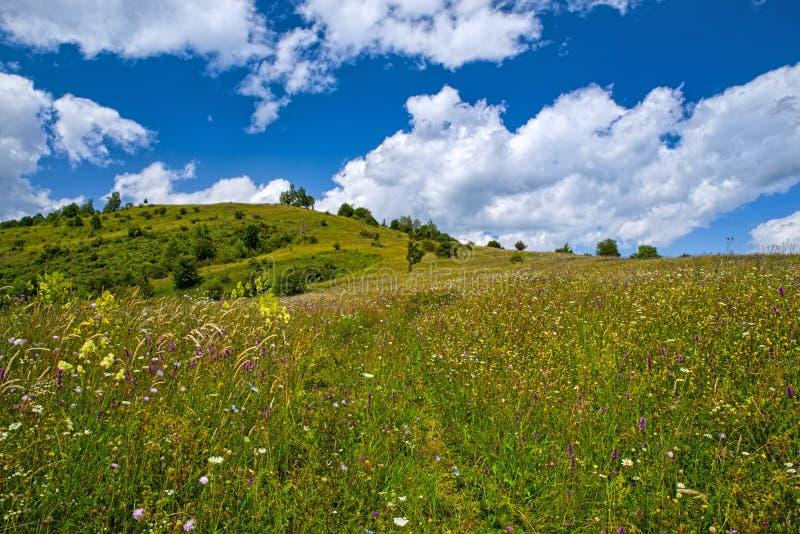 Gebirgssommerweide mit Wildflowers stockbilder