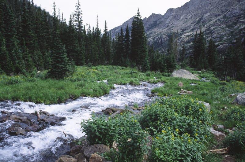 Gebirgsstrom in den Kolorado-felsigen Bergen stockbilder