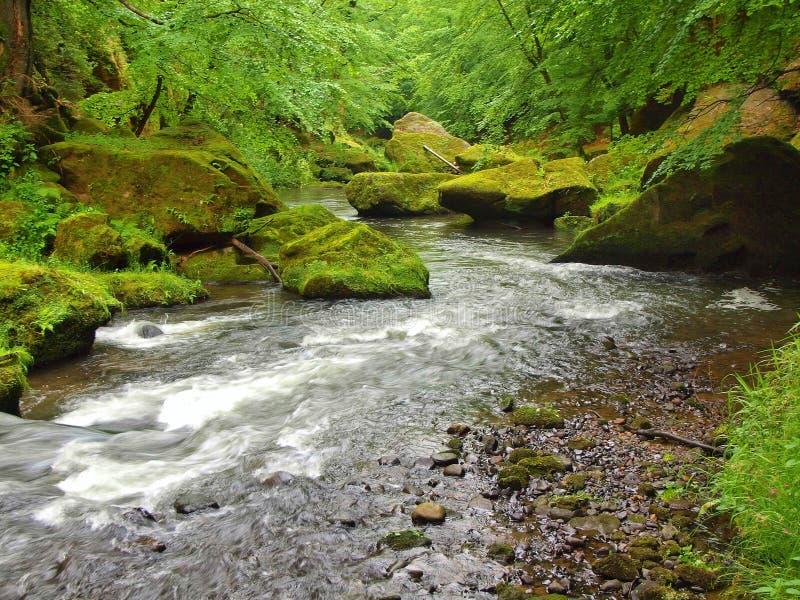 Gebirgsstrom mit großen Flusssteinen unter frischen grünen Bäumen Wasserspiegel macht grüne Reflexionen Das Ende des Sommers lizenzfreie stockfotografie