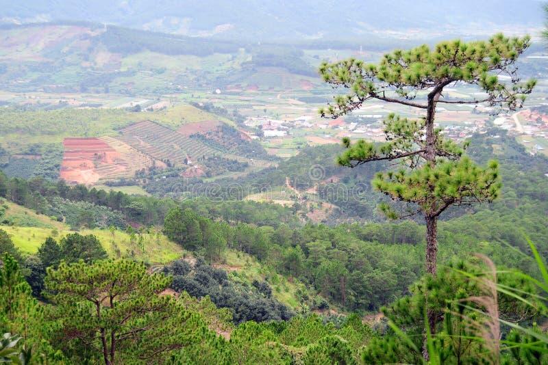 Gebirgsszene mit Kiefern in Lai Chau, Vietnam stockbilder