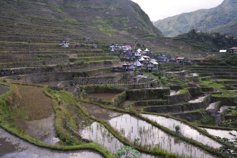Gebirgstal mit Reis-Feldern auf Terrassen lizenzfreie stockbilder