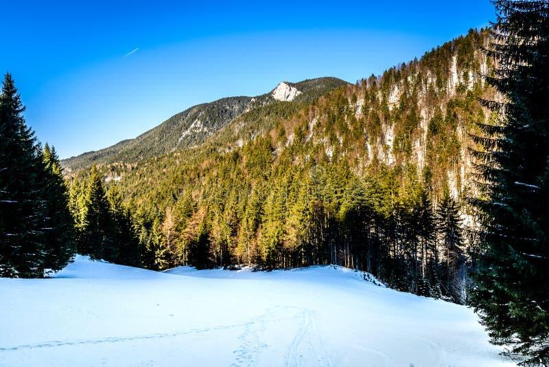 Gebirgstier- und menschliche Wege im Schnee im Wald stockfotos