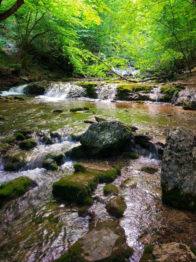 Gebirgswasserfall im Wald stockbild