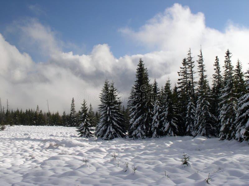 Download Gebirgswiese stockbild. Bild von bäume, holz, himmel, wolken - 46105