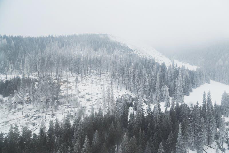 Gebirgswinter-Koniferenwald bedeckt mit Nebelansicht vom Fliegenbrummen lizenzfreie stockfotos