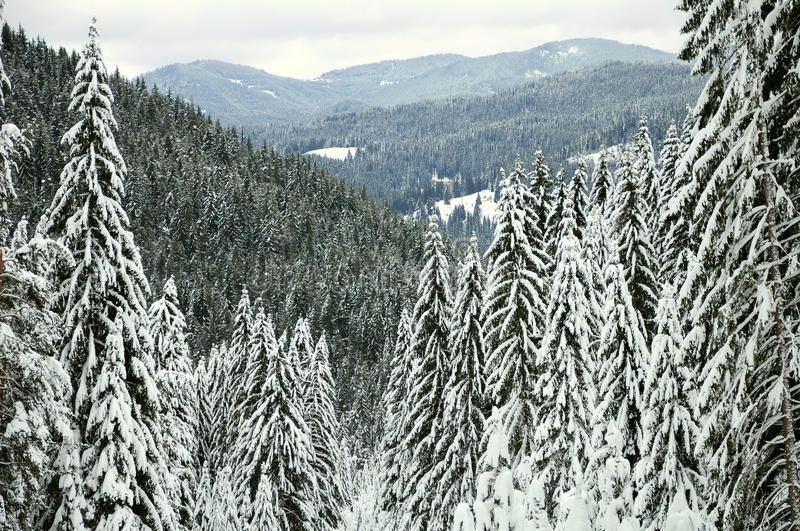 Download Gebirgswinterwald stockfoto. Bild von winter, wolken - 27726450