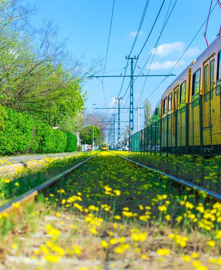 Geblühte Schienen lizenzfreies stockfoto