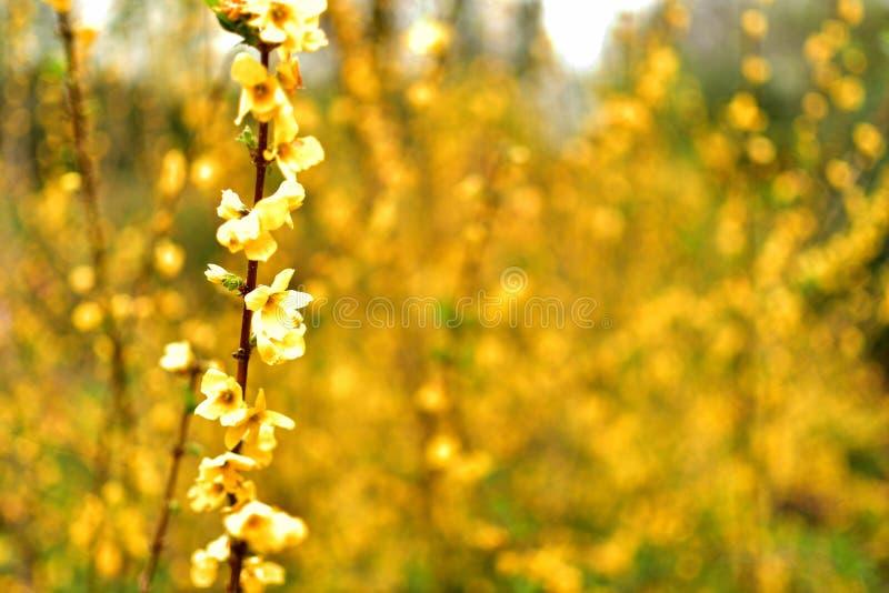 Geblühte wilde gelbe Blume mit vollem unscharfem Hintergrund stockfoto
