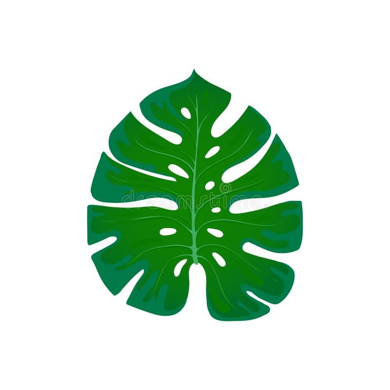 Gebladertemonstera Tendenselement van het palmbladontwerp op een wit Tropische exotisch en installaties royalty-vrije illustratie