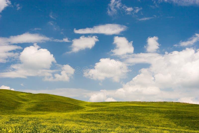 Gebloeid Landschap stock afbeelding
